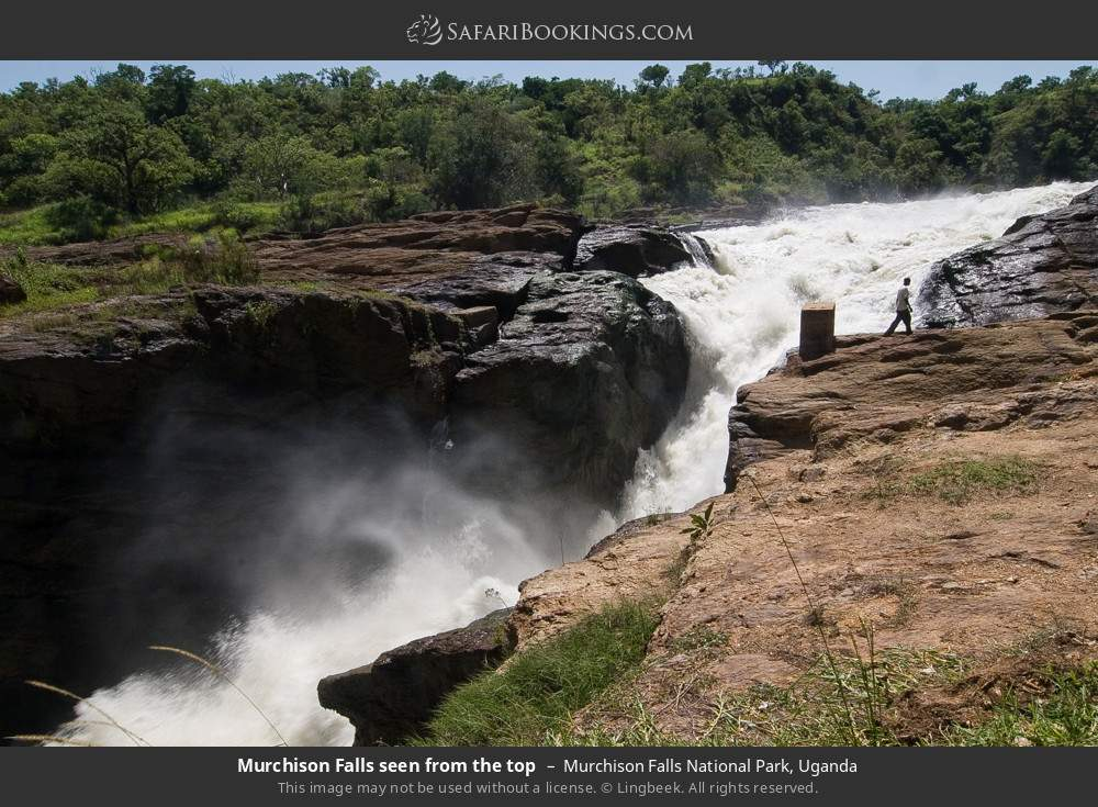 Murchison Falls seen from the top in Murchison Falls National Park, Uganda