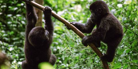 14-Day Rwanda Tour and Uganda's Gorillas plus Big Five