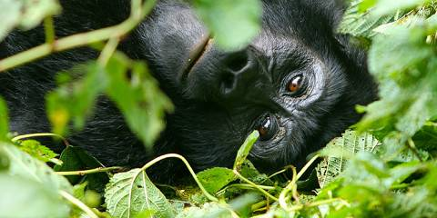 4-Day Gorilla Tracking and Lake Bunyonyi Jewel Safari