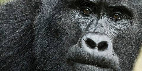 8-Day Mountain Gorillas and Wildlife in Uganda Mid-Range