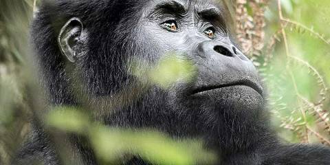 6-Day Amazing Wildlife & Gorilla Tracking Safari