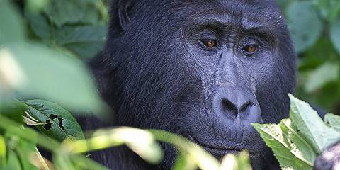 5-Day Bwindi & Mburo National Parks Safari