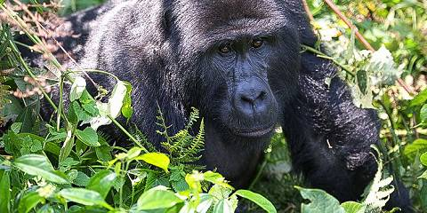 6-Day Pearl of Africa Trip Including Gorilla Trekking