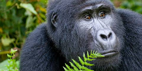 8-Day Fly – in Uganda'S Gorillas, Enjoy Wildlife