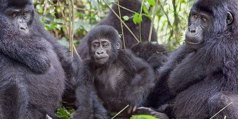 8-Day Gorilla Safari, Wildlife and River Nile Rafting