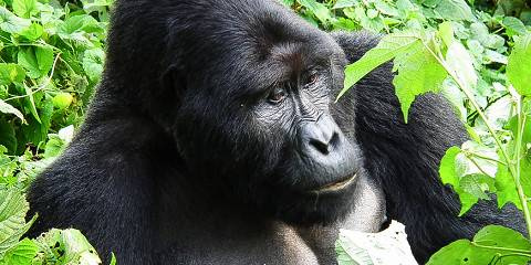 10-Day Luxury Uganda Gorilla and Wildlife Safari
