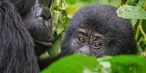 4-Day Bwindi Gorilla Tracking and Lake Bunyonyi Safari