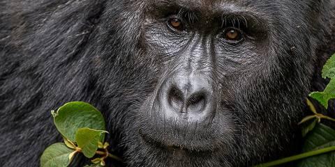5-Day Water Rafting, Gorilla Tracking & Batwa Experience