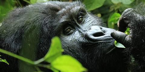 3-Day Uganda Gorilla Trekking Safari from Kigali