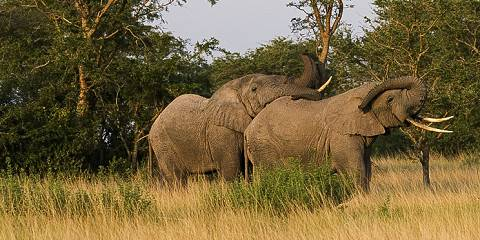 22-Day Camping Safari in the Pearl of Africa