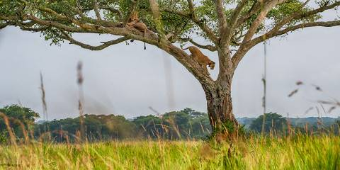 5-Day Queen Elizabeth National Park Safari Experience