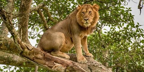 11-Day Best of Uganda Safari Holiday