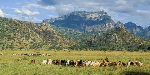 8-Day Far East Widerness Safari