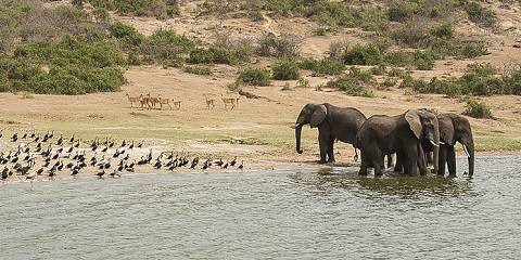 6-Day Marveling in Murchison Falls NP and Jinja