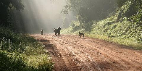 18-Day Ugandan National Parks Tour