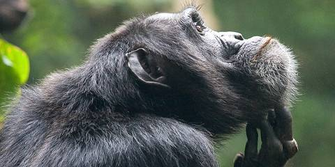 3-Day Queen Elizabeth Wildlife and Chimpanzee Safari
