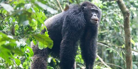 3-Day Murchison Falls Big Five with Chimpanzee Trekking