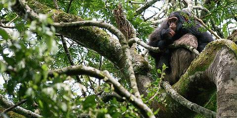7-Day Ultimate Uganda Highlights Safari