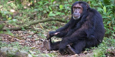 4-Day Queen Elizabeth NP Game Viewing and Chimp Trekking