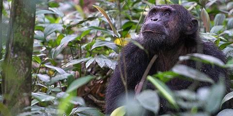 5-Day Uganda Wildlife and Chimps