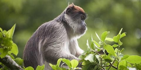 6-Day Gorillas, Primates, Lake Bunyonyi-via Kigali