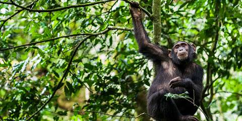 3-Day Primate and Murchison Falls Wildlife Adventure