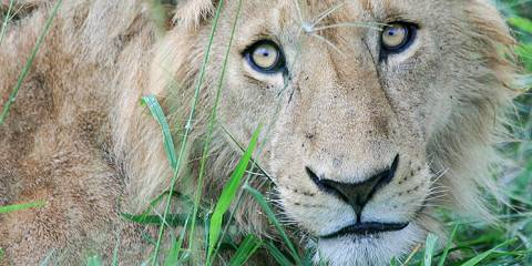 6-Day Kidepo and Murchison Falls Big Five Experience