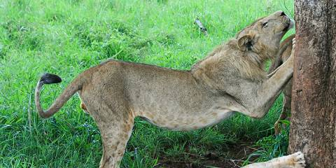 4-Day Murchison Falls Safari
