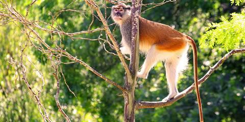 5-Day Gorillas, Chimpanzees & Golden Monkeys Safari