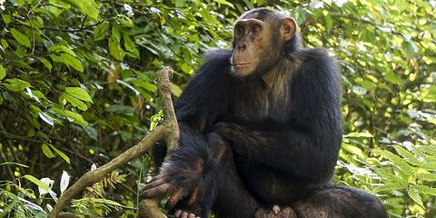 9-Day Gorillas and Chimps
