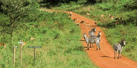 2-Day Luxury Mini Safari to Mihingo Lodge Lake Mburo NP