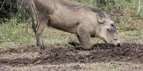 12-Day Uganda, Jinja, Murchison, Chimps and Gorillas