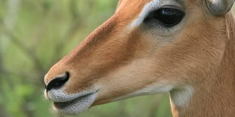 4-Day Amazing Kenya Safari