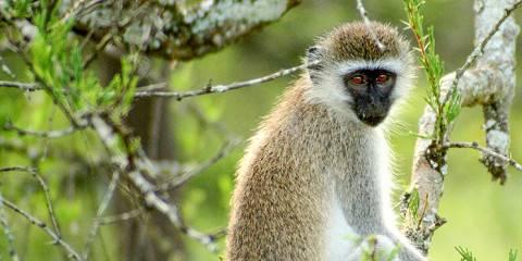 3-Day Beautiful Uganda Wildlife