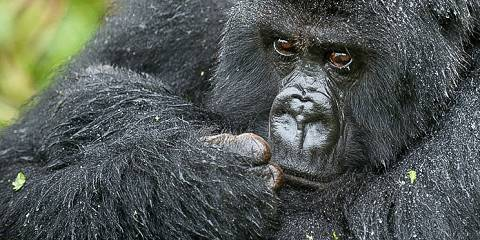 6-Day Gorillas & Wildlife 2020 Scheduled Group Tour
