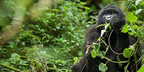15-Day Basic Gorilla, Lions and Waterfalls Safari