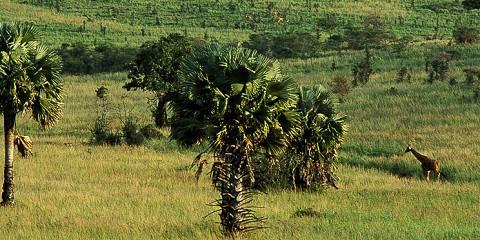 7-Day Uganda'S Most Popular National Parks