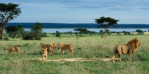 14-Day Vacation Exploring the Wild Pearl of Africa