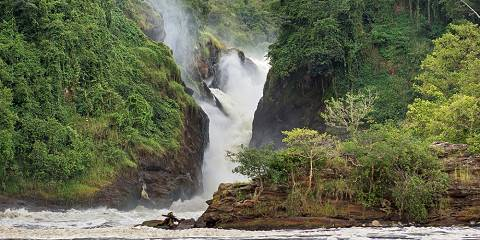 6-Day Murchison Falls, Chimp Trekking and Big Game Combo
