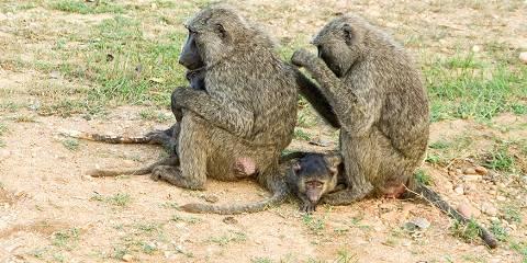 14-Day Discover Uganda Safari