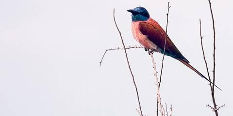 9-Day Birding Safari in Uganda