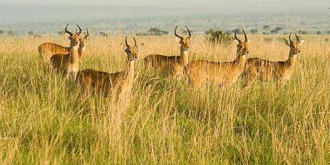 10-Day The Pearl of Africa (Uganda) Classic Safari