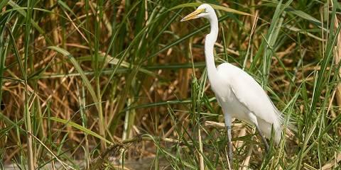 1-Day Great Shoebill Search at Mabamba Swamp