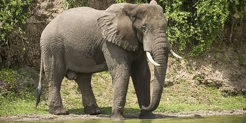 20-Day Day Uganda Wilderness Adventure Safari