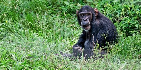 10-Day Gorilla Trekking, Wildlife & Kigali City Tour