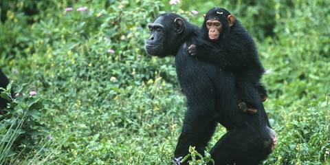 3-Day Chimpanzee and Rhino Tracking, Boat Cruise, Hike