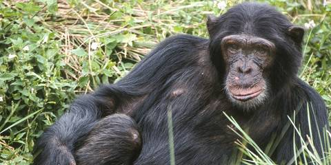 10-Day Gorilla, Chimps Habituation, Golden Monkey Trek