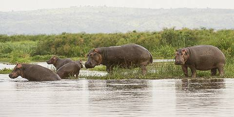 12-Day Wildlife and Nature Tour of the Pearl of Africa