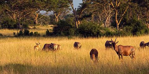 7-Day Kidepo Valley and Murchision Falls National Park