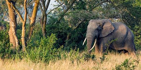 9-Day Ultimate Uganda Safari Adventure